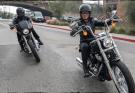 2020 Harley-Davidson Softail Standard Cruisers
